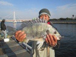 尼崎市立魚つり公園 チヌ48cmやキビレ45cmなど
