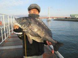尼崎市立魚つり公園 エビ撒きズボ釣りでスズキ・ハネ・チヌ