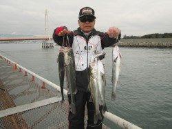 尼崎市立魚つり公園 エビ撒きでハネ・チヌが好調でした