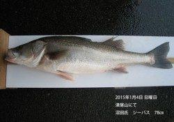 津居山にてシーバス78cm