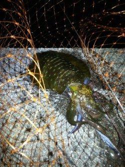 2015年初釣りは円月島前にてヤエン釣り アオリイカ500gまでを4ハイ☆