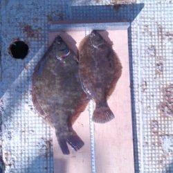 岸和田一文字 投げ釣りでカレイ・アイナメの釣果出てます