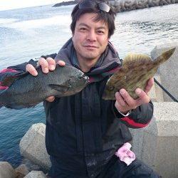 萩尾 カゴ釣りでグレ・カワハギ ヤエンでアオリイカの釣果