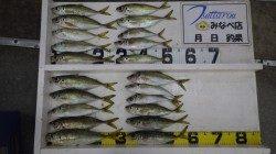 田辺文里港でカゴ釣り 良型のマアジ・丸アジたくさん釣れました