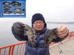 平磯海づり公園 ウキ釣りでメバルの釣果