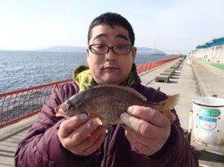 平磯海づり公園 青イソメをエサにウミタナゴの釣果