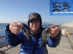 平磯海づり公園 ウキ釣りでメバル
