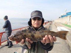 平磯海づり公園 ウキ釣りでアイナメ40.5cm!