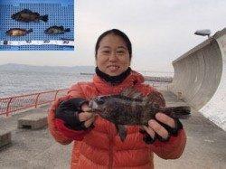 平磯海づり公園 胴突でメバルの釣果