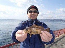 神戸市立平磯海づり公園のメバル釣果