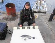 黒島の磯 オキアミ(ボイル)でチヌ46cm