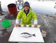 黒島の筏 ボケをエサにチヌ45cm