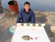 黒島の筏 ボケをエサにカワハギ28cm