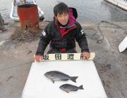 黒島の筏にてチヌとへダイの釣果