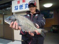 湯浅の磯・カルモ島 フカセ釣りで良型チヌ釣れました