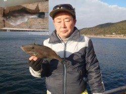 須磨海づり公園 ハゲカケ仕掛けでウマヅラハギ31cm