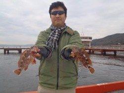須磨海づり公園 胴突き仕掛けでガシラの釣果