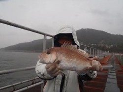 須磨海づり公園 ウキ流し釣りでマダイ45cm