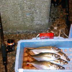 津居山港 やっと初釣りでアジ6尾