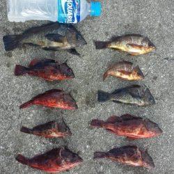 根魚 夜釣り 爆釣‼️