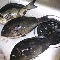 沖磯 フカセ釣果です。