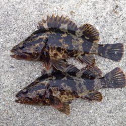 久しぶりの釣行で、何とかボウズは免れました。