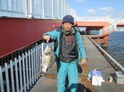 尼崎市立魚つり公園 チヌ6枚にセイゴとウミタナゴの釣果