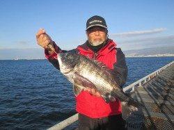 朝一の一投目で52cmのチヌ!尼崎市立魚つり公園