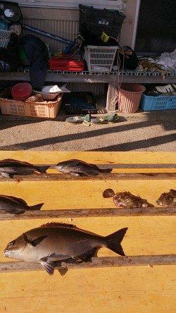 串本萩尾の磯でのグレ釣果