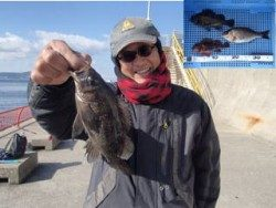 平磯海釣り公園 ウキ流し釣りでメバル・ガシラ・タナゴ
