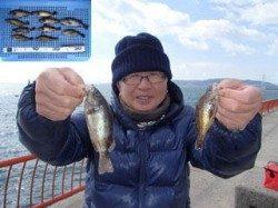平磯海づり公園 ウキ釣りでメバル10匹
