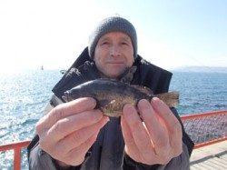 神戸市立平磯海づり公園 ウキ釣りでメバルの釣果