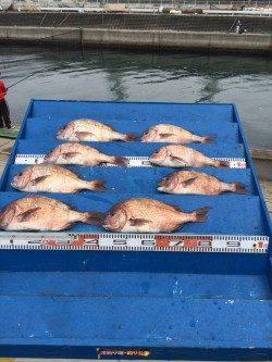 マリーナシティ海洋釣り堀 雨の中でもマダイ8尾