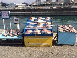 和歌山マリーナシティ海洋釣り堀 少人数貸切でマダイ・メジロ