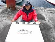 黒島の筏のチヌ釣果