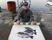 黒島の磯、鷹島のカンドリ フカセで良型チヌの釣果