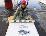 黒島の筏 ヤエン釣りでコウイカ