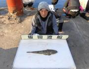 黒島の筏 のませでマゴチ52cm