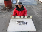 黒島の筏でのチヌ釣果