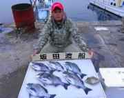 黒島の筏 オキアミ・ボケで良型チヌを6枚