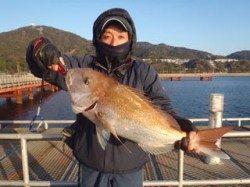須磨海釣り公園 ウキ流し釣りでマダイ69cm