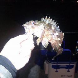真夜中釣行