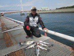 尼崎市立魚つり公園のチヌ・ハネ ウキ・ズボどちらも上向き調子