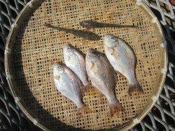 尼崎市立魚つり公園 ハネ狙いなら餌はシラサエビ