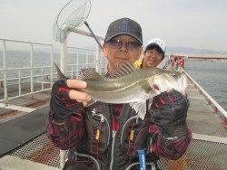 尼崎市立魚つり公園のハネ・セイゴ釣果、サビキは回遊遅れているようです