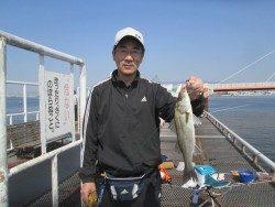 尼崎市魚つり公園 サビキのカタクチイワシ出始めました