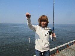 尼崎市立魚つり公園 シラサでチヌの釣果