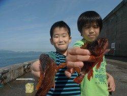 和歌山北港魚つり公園 ウマヅラハギとガシラの釣果