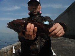 和歌山北港魚つり公園 カンダイの釣果