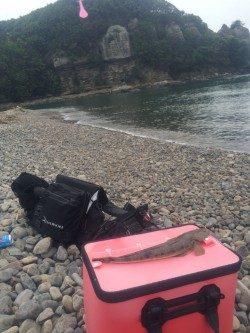 富田の浜にてマゴチの釣果